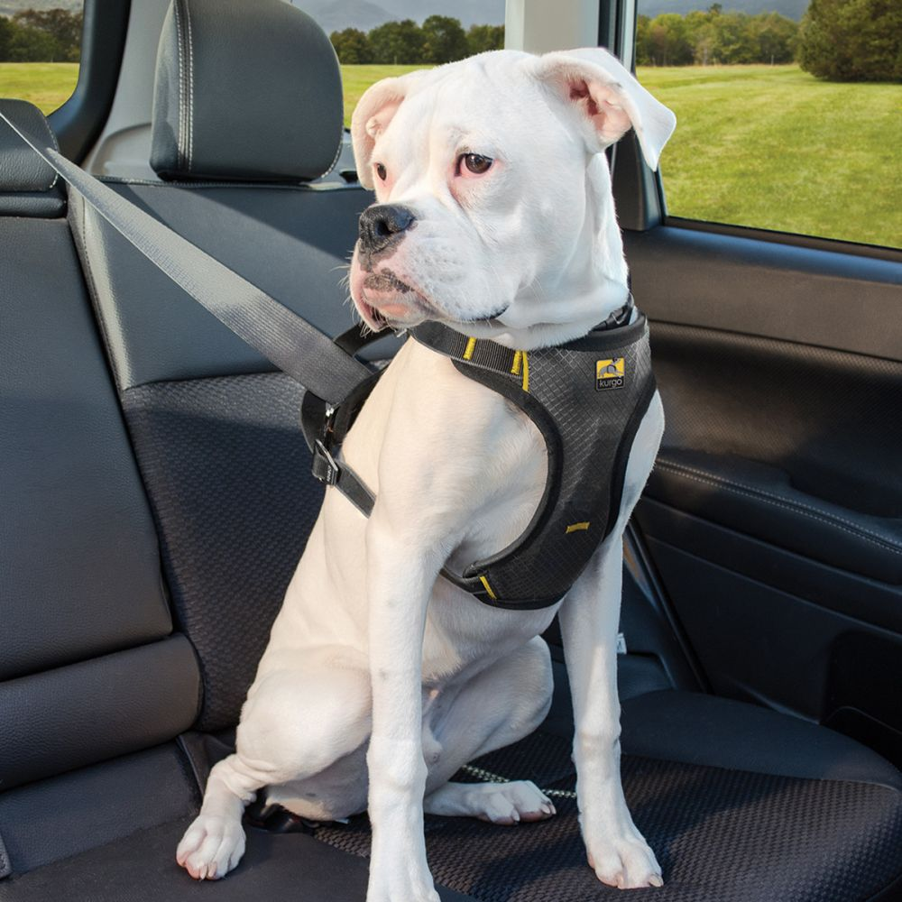 Dog Harness For Use In Car